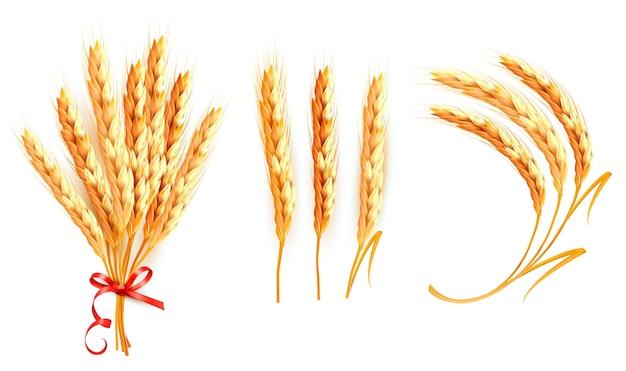 Set di spighe di grano isolato su bianco