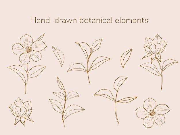 Set di eleganti elementi botanici in uno stile lineare minimalista alla moda