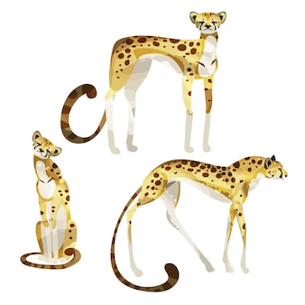 Set di eleganti ghepardi decorativi