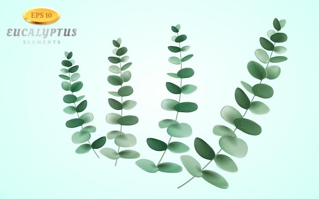 Set di infiorescenza di eucalipto su sfondo chiaro