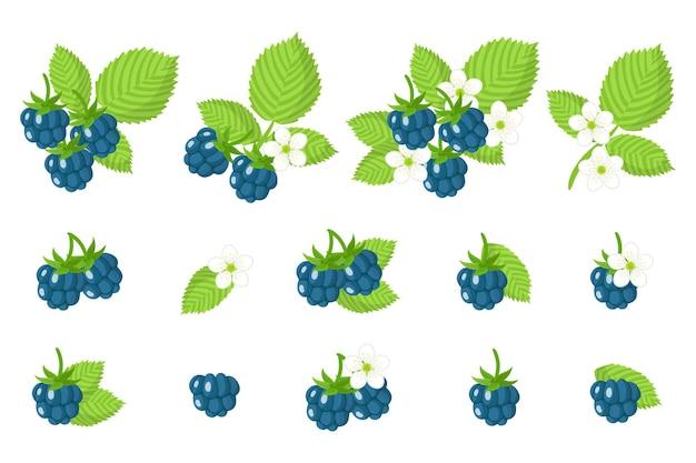 Set di frutti esotici di mirtillo rosso europeo isolato su bianco