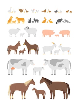 Set di animali da fattoria e uccelli