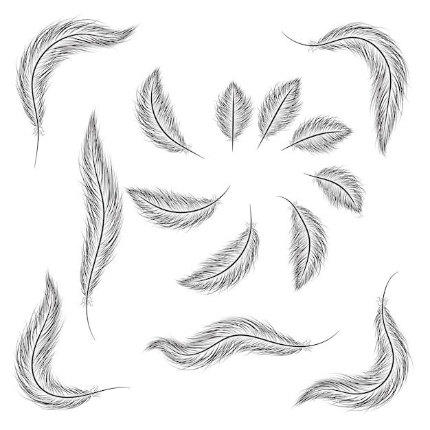Set di piume sono disegnati a mano su uno sfondo bianco.