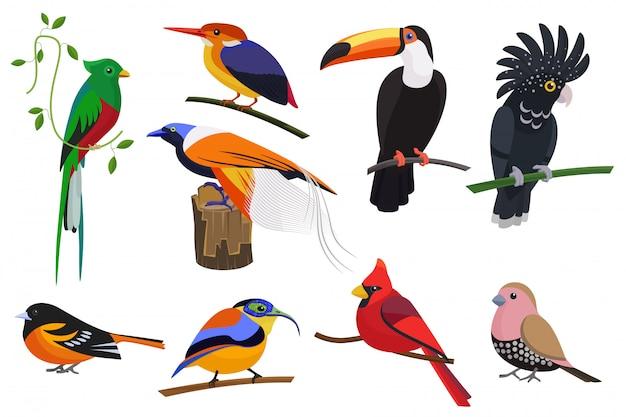 Insieme di uccelli tropicali esotici del fumetto piatto impostato.
