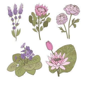 Set di fiori su uno sfondo bianco protea lavanda ranunculus viola ninfea