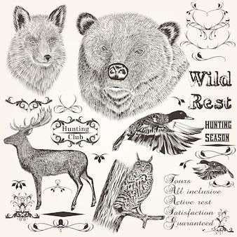 Set di animali della foresta illustrati e gli ornamenti