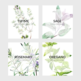 Set di quattro carte con erbe da cucina