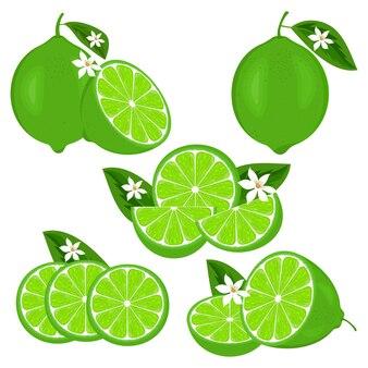 Set di lime succose fresche o limoni agrumi con fiori e fette