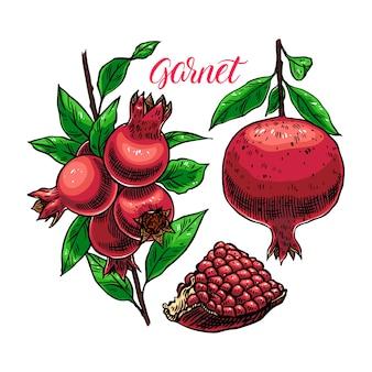 Set di melograno fresco e succoso con semi. illustrazione disegnata a mano