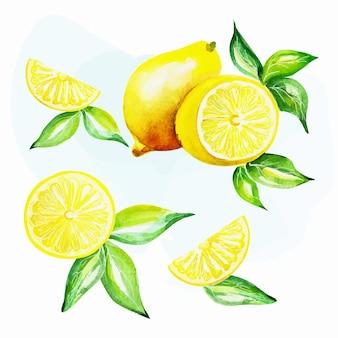 Set di composizioni di frutta fresca di limone. illustrazione disegnata a mano dell'acquerello.