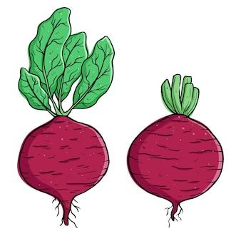 Set di illustrazioni di ravanelli freschi con stile di disegno a mano colorato
