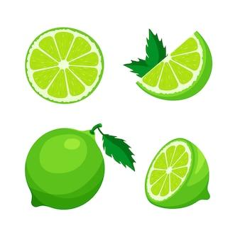 Set di fresco intero, mezzo, tagliare la fetta di lime isolato su sfondo bianco. agrumi e foglie. icone di cibo vegano in stile cartone animato alla moda. concetto di cibo sano.