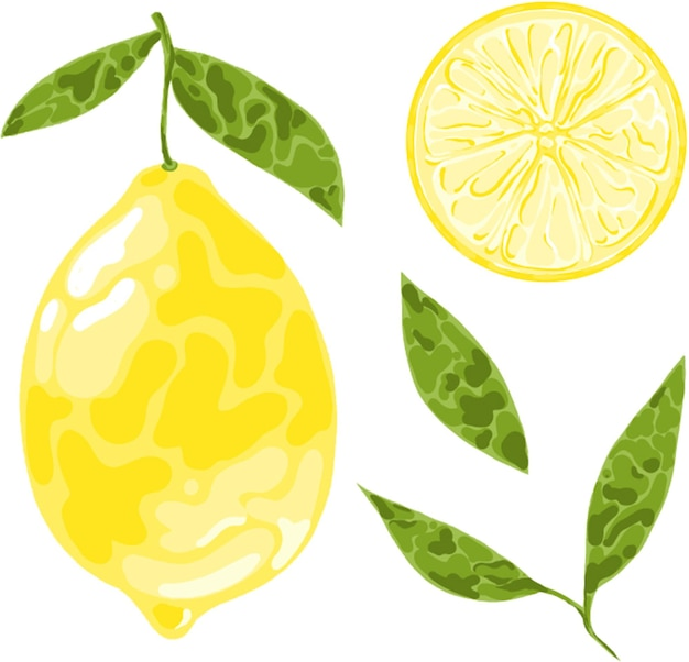 Set di elementi di frutta limone fette e foglie di limone