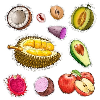 Insieme dell'illustrazione dell'acquerello della raccolta di frutta