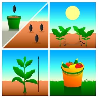 Serie di illustrazioni di giardinaggio