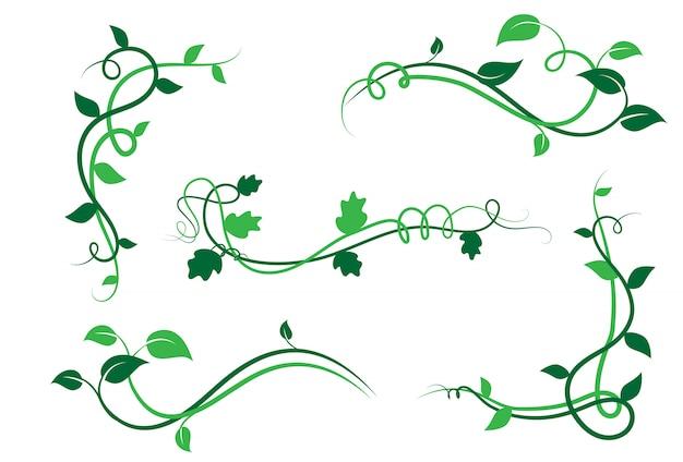 Insieme degli elementi floreali verdi della decorazione del bordo, foglie, isolato su bianco