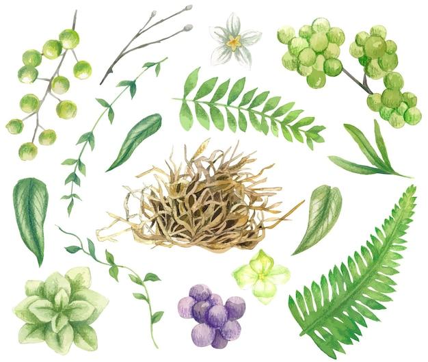 Set di foglie verdi rami bacche di fieno e piccoli fiori