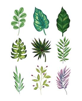 Set di foglie verdi e uno viola su sfondo bianco