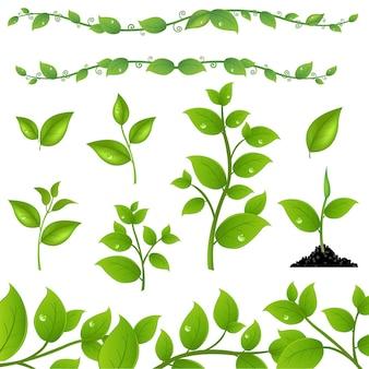 Insieme di foglie verdi e germogli, isolati su sfondo bianco,