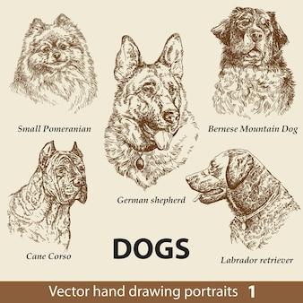 Set di cani da disegno a mano