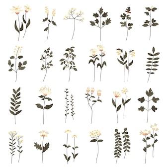Set di doodle botanico minimalista femminile colorato boho disegnato a mano