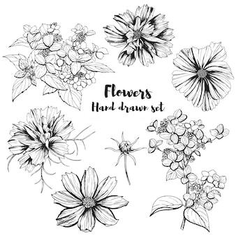 Insieme di oggetti botanici disegnati a mano, ortensie e cosmea, illustrazione disegnata a mano di vettore.