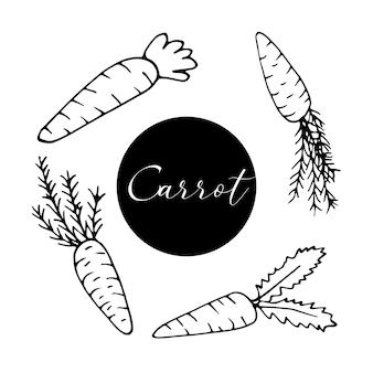 Set di carote disegnate a mano per il design pasquale, biglietti di auguri, poster, ricette, design culinario. isolato su sfondo bianco. illustrazione vettoriale di scarabocchio.