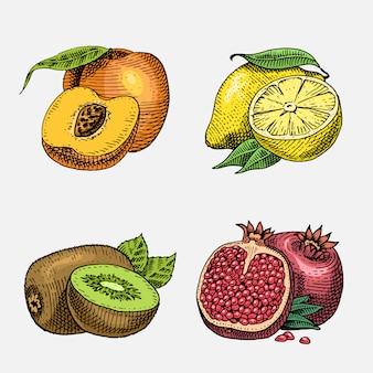 Set di disegnati a mano, frutta fresca incisa, cibo vegetariano, piante, kiwi dall'aspetto vintage, limone giallo pesca e melograno.