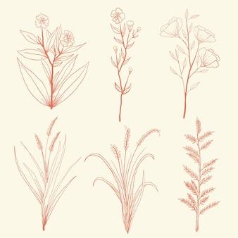 Impostare fiori selvatici erbe disegnate a mano con stile vintage