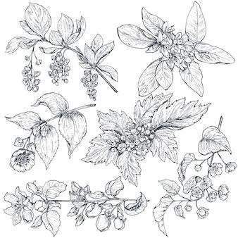 Insieme di rami di primavera di schizzo di inchiostro disegnato a mano, piante con foglie e fiori isolati su priorità bassa bianca. bella collezione vettoriale