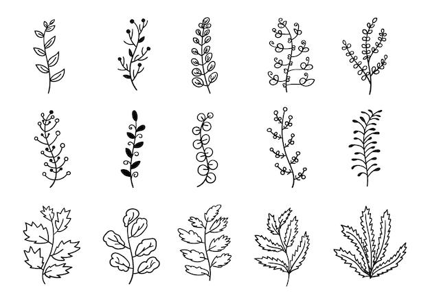 Set di fiore ramo foglia disegnato a mano con forma diversa su sfondo bianco.