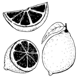 Set di limoni disegnati a mano su sfondo bianco. illustrazione