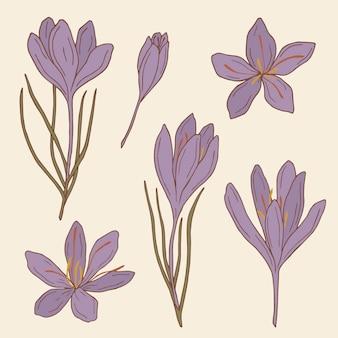 Set di fiori di zafferano disegnati a mano