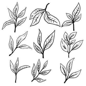 Set di illustrazioni di foglie di tè disegnate a mano. elemento di design per poster, etichette, biglietti, banner, volantini.