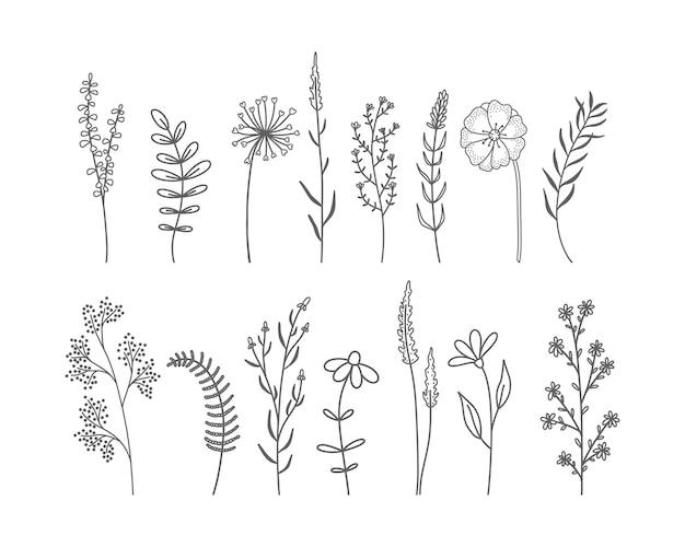 Set di fiori selvatici ed erbe disegnati a mano.