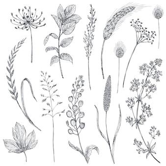 Set di erbe e fiori, illustrazione vettoriale disegnata a mano in stile schizzo grafico