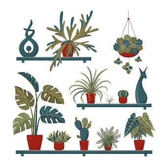 Set di piante domestiche ed elementi decorativi sugli scaffali
