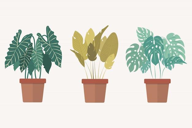 Set di pianta della casa in vaso