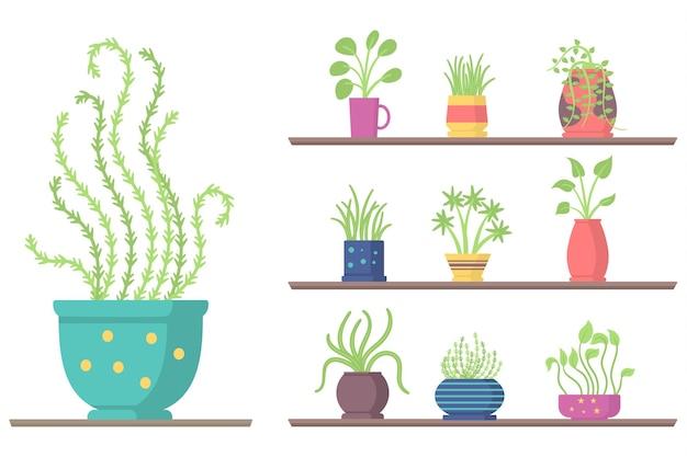 Set di piante da appartamento su scaffali vaso da fiori da giardino per la stanza o l'ufficio e l'interno verde della casa