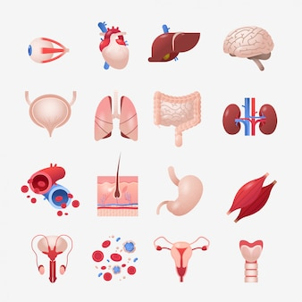 Impostare organi interni umani anatomici stomaco fegato reni polmoni cuore cervello reni muscoli oculari icone raccolta anatomia assistenza sanitaria concetto medico