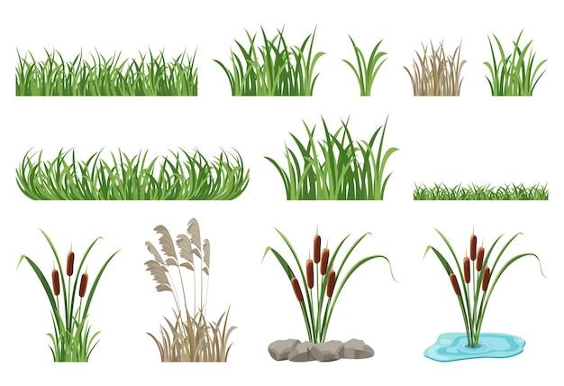 Serie di illustrazioni di canne, tife, elementi di erba senza soluzione di continuità. accumulazione di vettore di vegetazione palustre, prato verde.