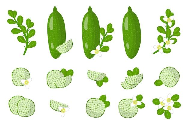 Serie di illustrazioni con frutta esotica finger lime, fiori e foglie isolati