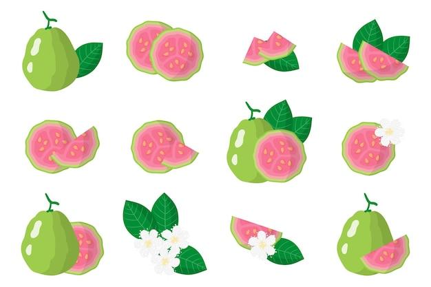 Serie di illustrazioni con frutti esotici guava, fiori e foglie isolati