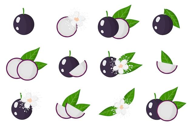 Serie di illustrazioni con jabuticaba frutti esotici, fiori e foglie isolati