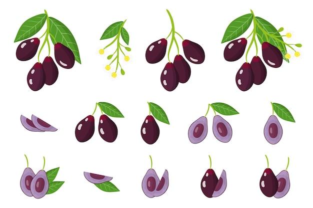Serie di illustrazioni con frutti esotici jambolan, fiori e foglie isolati