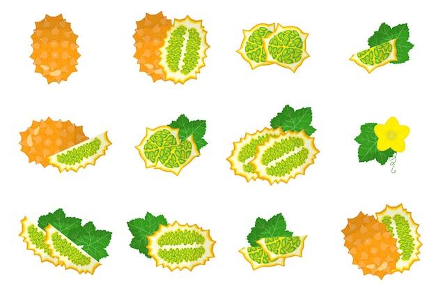 Insieme delle illustrazioni con frutti esotici kiwano, fiori e foglie isolati