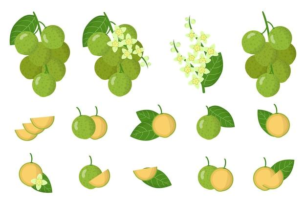 Serie di illustrazioni con mamoncillo frutti esotici, fiori e foglie isolati