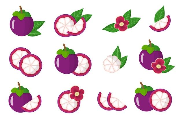 Insieme delle illustrazioni con frutti esotici del mangostano, fiori e foglie isolati