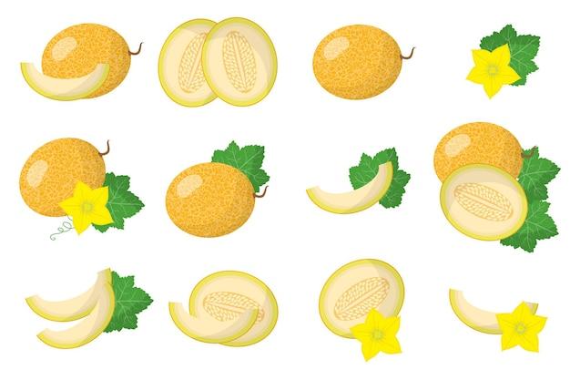 Serie di illustrazioni con frutti esotici di melone, fiori e foglie isolati