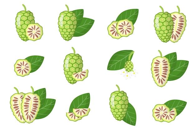 Serie di illustrazioni con frutta esotica noni, fiori e foglie isolati